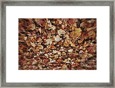 Natures Abstract Of Fall Leaves Framed Print by Lee Craig