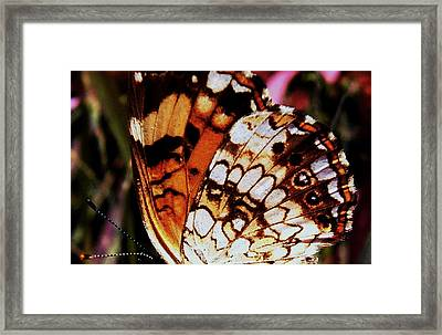 Natures Abstracts Butterfly Wings 005 Framed Print by George Bostian