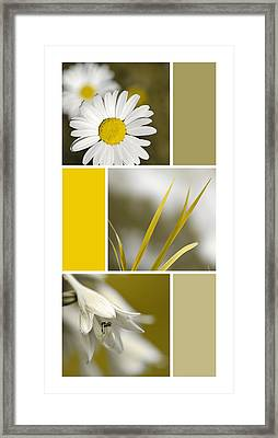 Nature's Beauty Golden Flowers Collage Framed Print by Christina Rollo