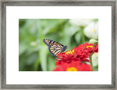Natures Beauty - The Buterfly Framed Print by Bill Cannon