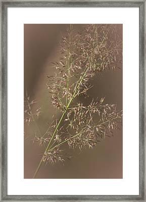 Nature's Calm Framed Print by  The Art Of Marilyn Ridoutt-Greene