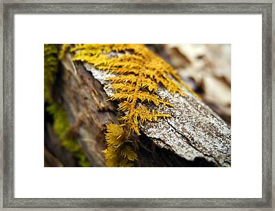 Nature's Carpet Framed Print by Christina Rollo