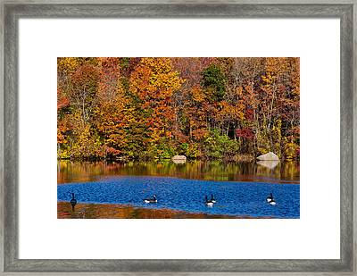 Natures Colorful Autumn Framed Print by Karol Livote