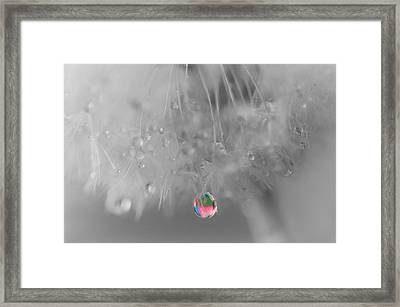Nature's Crystal Ball Framed Print by Marianna Mills