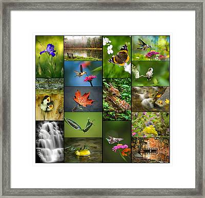 Nature's Finest Framed Print by Christina Rollo