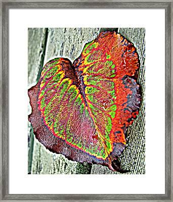 Nature's Glory Framed Print by Barbara McDevitt