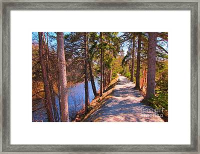 Natures Highway Framed Print by John Malone