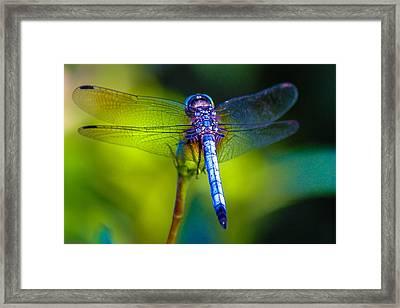 Natures Jewels Framed Print by Lesley Brindley