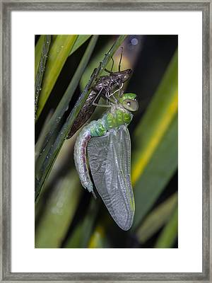 Natures Miracle 3 Framed Print by David Lester