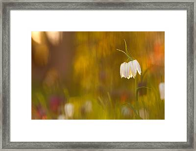 Natures Painting - Snakes Head Fritillaries Framed Print by Roeselien Raimond