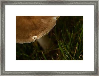 Natures Room Framed Print by Karol Livote