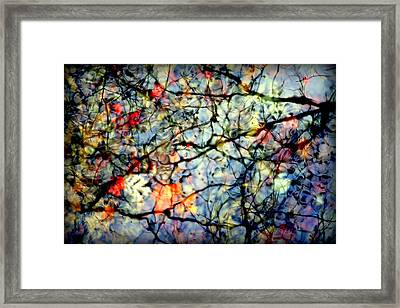 Natures Stained Glass Framed Print by Karen Wiles