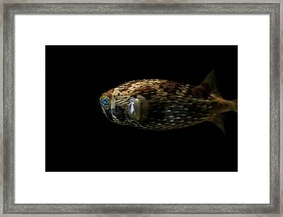 Naturescape 52 A Framed Print by Otri Park