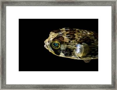 Naturescape 52 B Framed Print by Otri Park