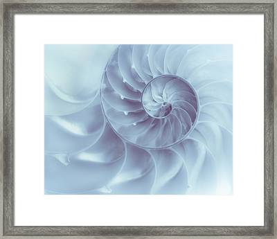 Nautilus - Dreaming Of The Sea Framed Print by Tom Mc Nemar