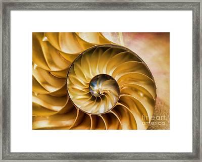 Nautilus Shell Framed Print by Olga Hamilton