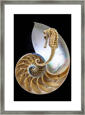 Nautilus With Seahorse Framed Print by Garry Gay