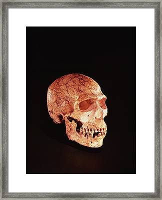 Neanderthal Skull, Discovered On Mt Carmel, Palestine C.1920 Bone Framed Print by Prehistoric