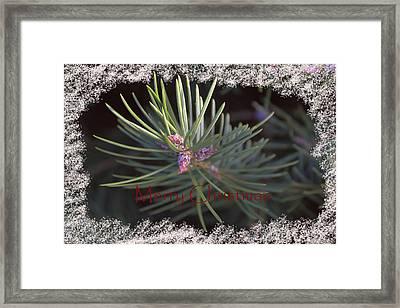 Needles Of Joy Framed Print by Melanie Melograne