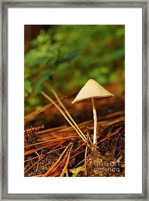 Needling Through Framed Print by Lynda Dawson-Youngclaus