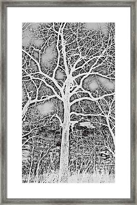 Negative Image Black And White Tree Branches Abstract Design Framed Print by Adri Turner
