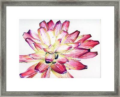 Neoregelia Picasso Framed Print by Penrith Goff