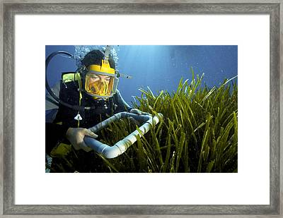 Neptune Grass Research Framed Print by Science Photo Library