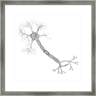Nerve Cell Framed Print by Pixologicstudio