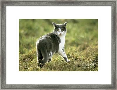 Nervous Cat Framed Print by Martin Rugner/Okapia