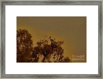 Nesting Jabiru  Framed Print by Douglas Barnard