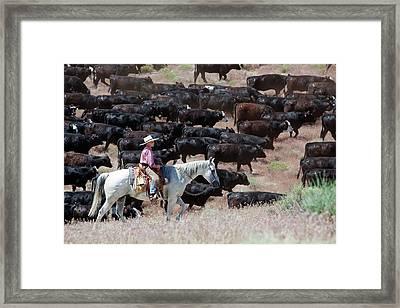 Nevada Cowboy Herding Cattle Framed Print by Jim West