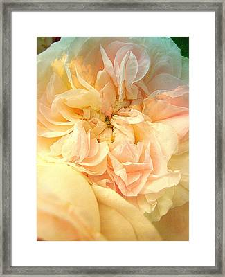 Never A Rose Like You Framed Print by Shirley Sirois