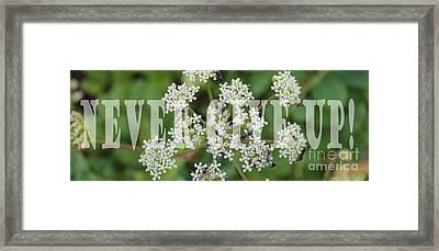 Never Give Up Framed Print by Barbara Griffin