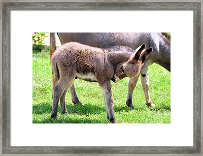 New Arrival Framed Print by Jan Amiss Photography