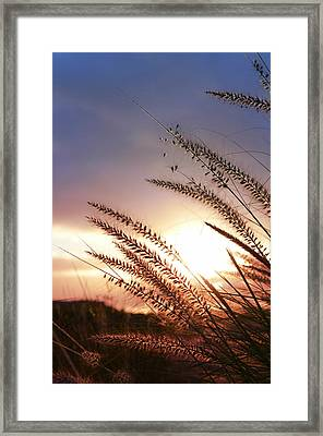 New Day Framed Print by Laura Fasulo
