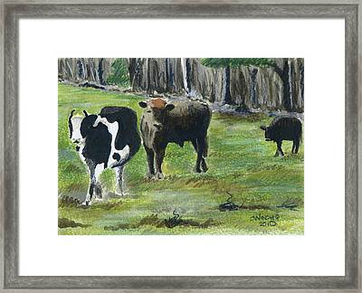 New England Cows Framed Print by Christine Winship