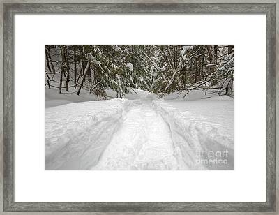 New England Snow-covered Forest - New Hampshire Usa Framed Print by Erin Paul Donovan