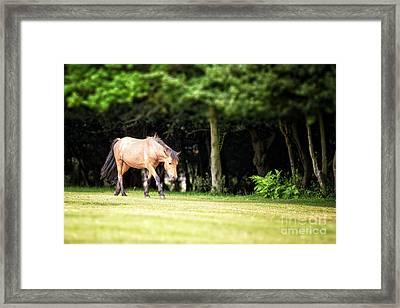 New Forest Pony Framed Print by Jane Rix