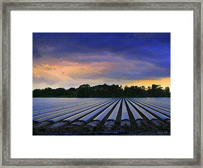 New Ground For Strawberries II Framed Print by Buzz  Coe