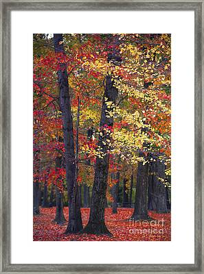New Jersey's Reds Framed Print by Marco Crupi