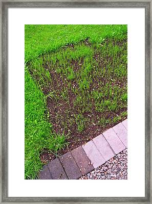 New Lawn. Framed Print by Mark Williamson