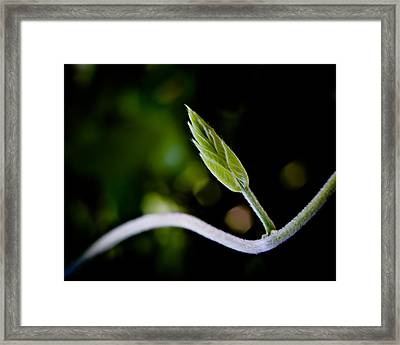 New Life Framed Print by Bob Orsillo