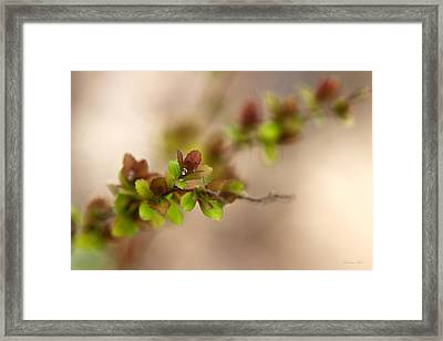 New Life Framed Print by Christina Rollo