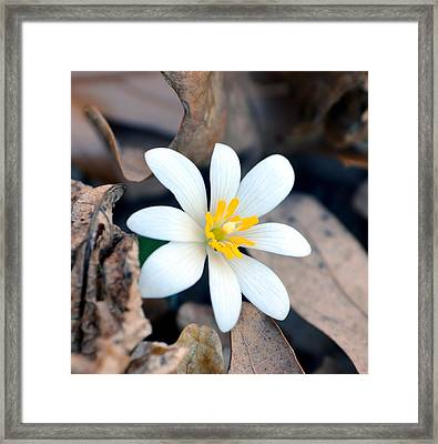 New Life Framed Print by Deena Stoddard