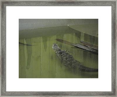 New Orleans - Swamp Boat Ride - 121213 Framed Print by DC Photographer