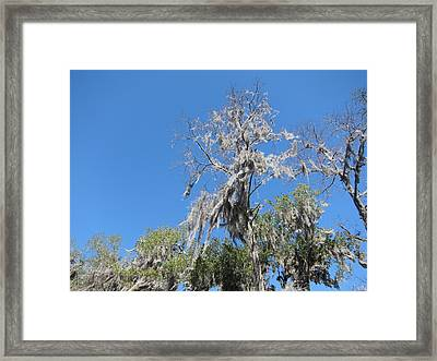 New Orleans - Swamp Boat Ride - 1212140 Framed Print by DC Photographer