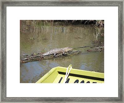 New Orleans - Swamp Boat Ride - 1212160 Framed Print by DC Photographer