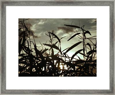 New Orleans Tall Grass Framed Print by Sherry Dooley