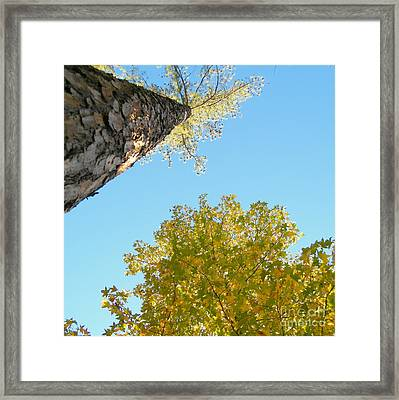 New Perspective On Autumn Leaves Framed Print by Cheryl Hardt Art