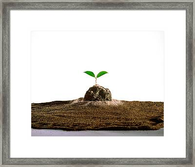 New Plant Growing On Sand Against White Framed Print by Panoramic Images